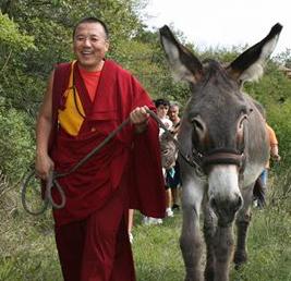 Alak Rinpoche con asino copia
